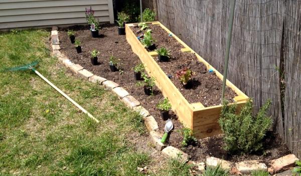Back Garden Bed Plants