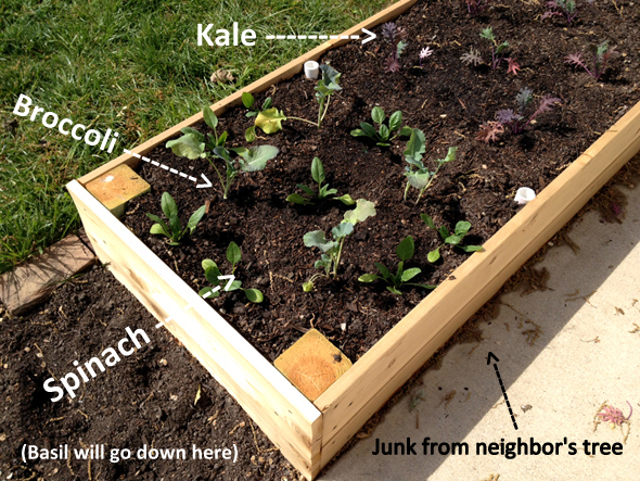 Middle Garden Bed Plants