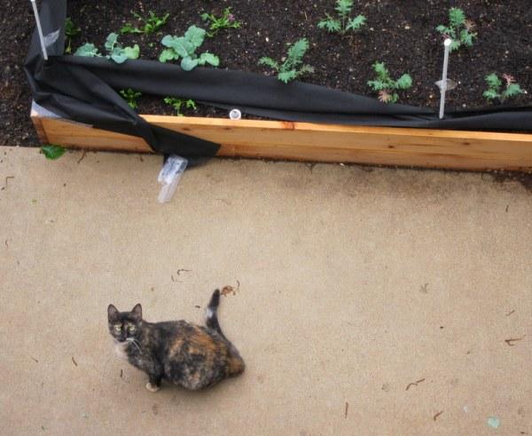 Cat Staredown