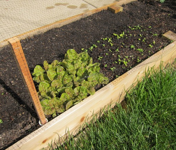 Raised Bed Garden Netting