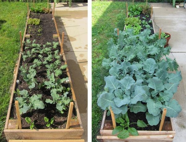 Garden May 13 vs May 27