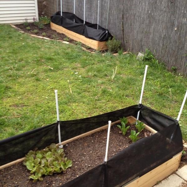 Garden Rabbit Barrier