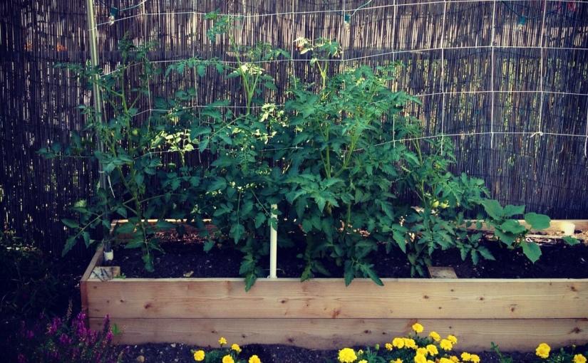 Pipe + Netting GardenTrellis
