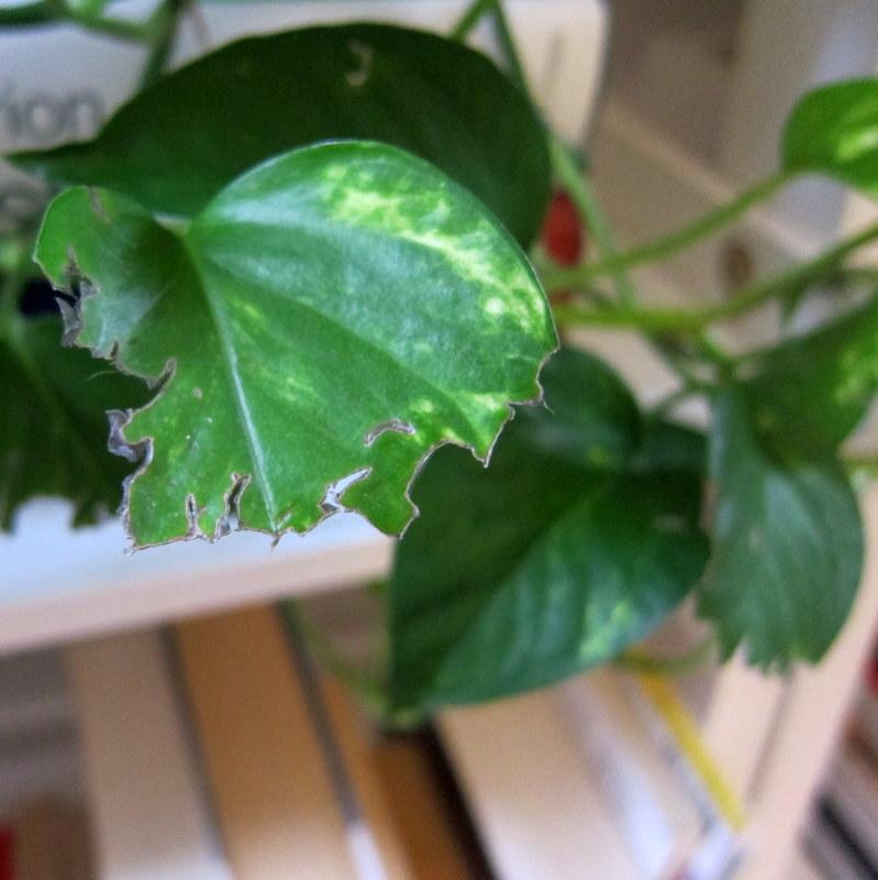 Cat Eaten Plant