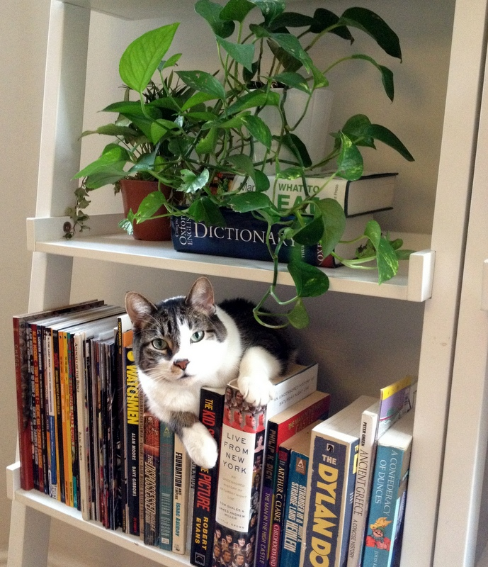Cat Concessions: Plants and Upholstery