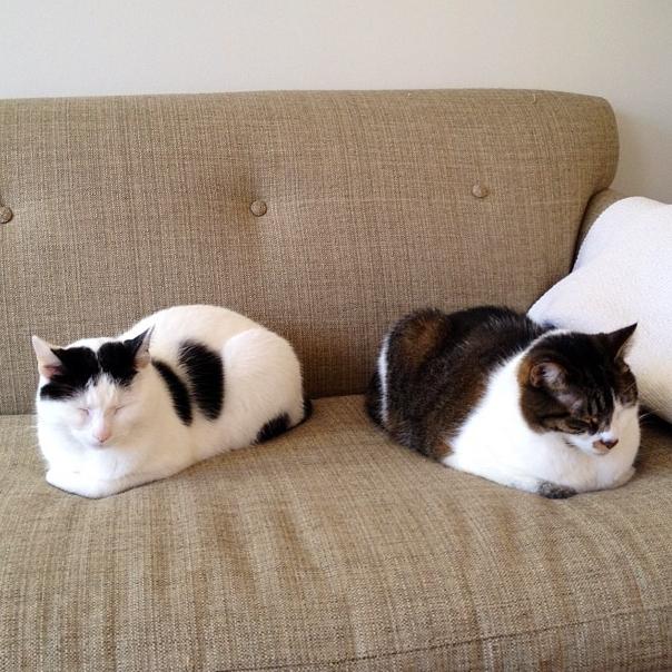 Twin Catloafs