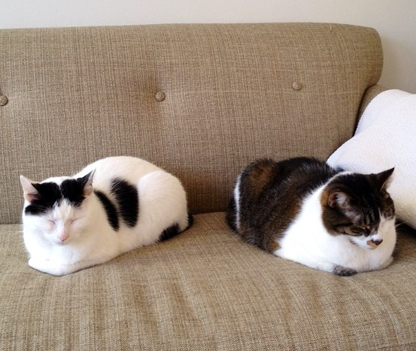 Twin Catloafs