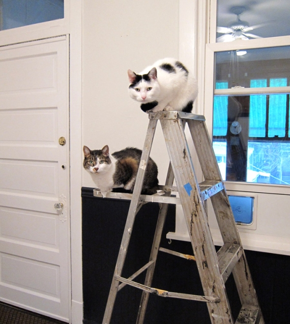 3KitchenPaintCatLadder