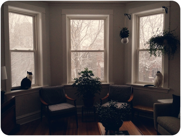 Cats in Bay Windows