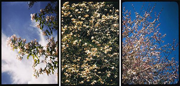 Cushman Trees