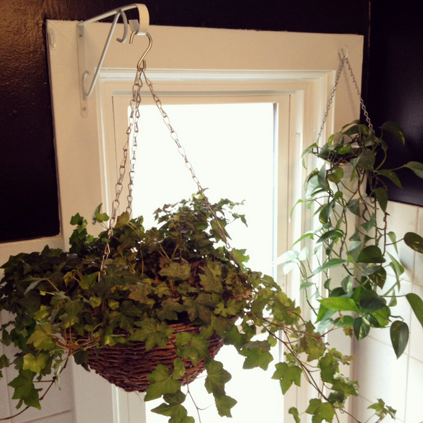 Hanging Plants in the Bathroom