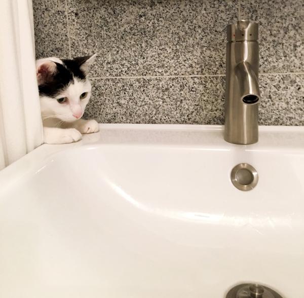 cat-inspector.JPG