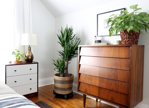 Bedroom Dresser and Plants.jpg