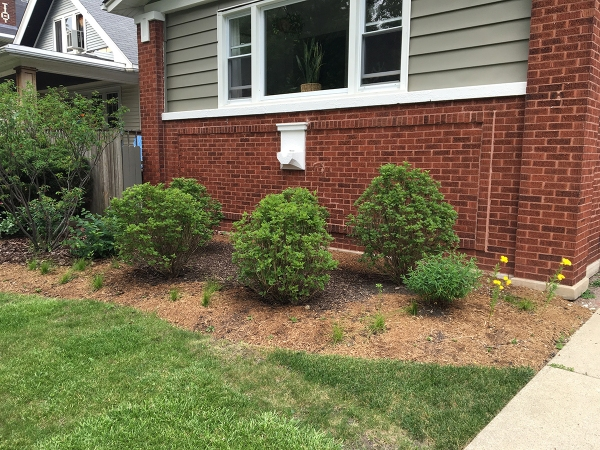 landscaping-front-yard-progress-3