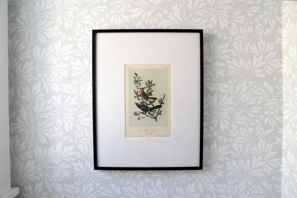 Framed Audubon Print.jpg