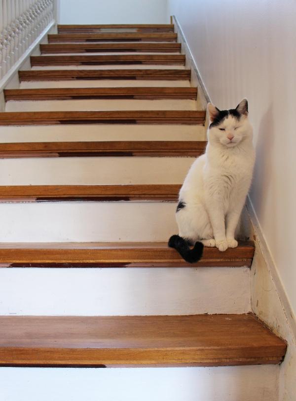 Cat on Stairs.jpg