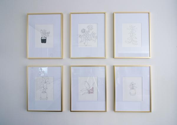 Framed Plant Drawings.jpg