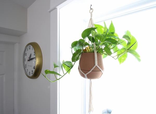Kitchen Window Hanging Planter.jpg