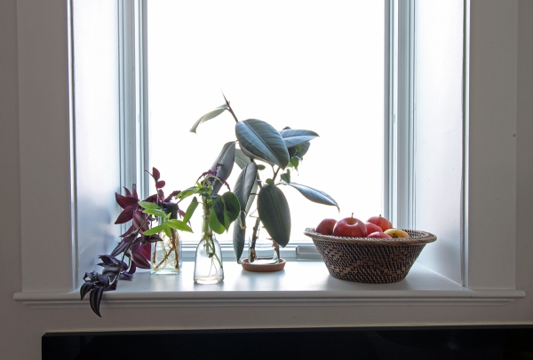 Kitchen Window Sill.jpg