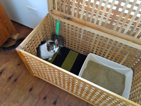 Lola in the Litter Box.JPG