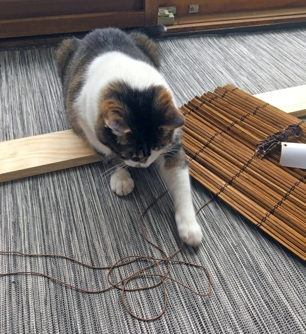 Lola Loves String