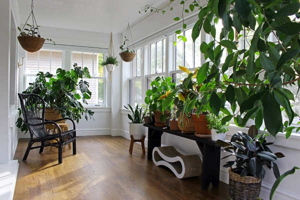 bungalow-sunroom-with-plants